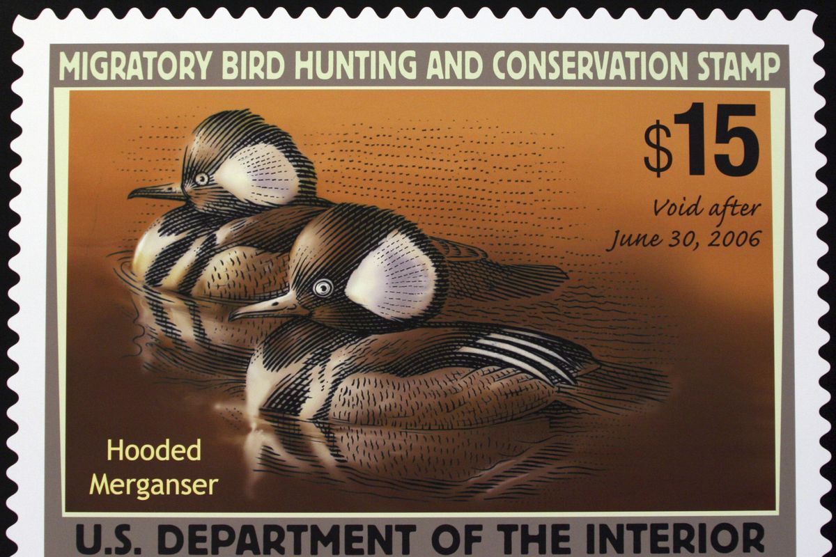 Artists will no longer have to incorporate hunting imagery to win a coveted spot for their work on the federal duck stamp, reversing a Trump-era requirement.