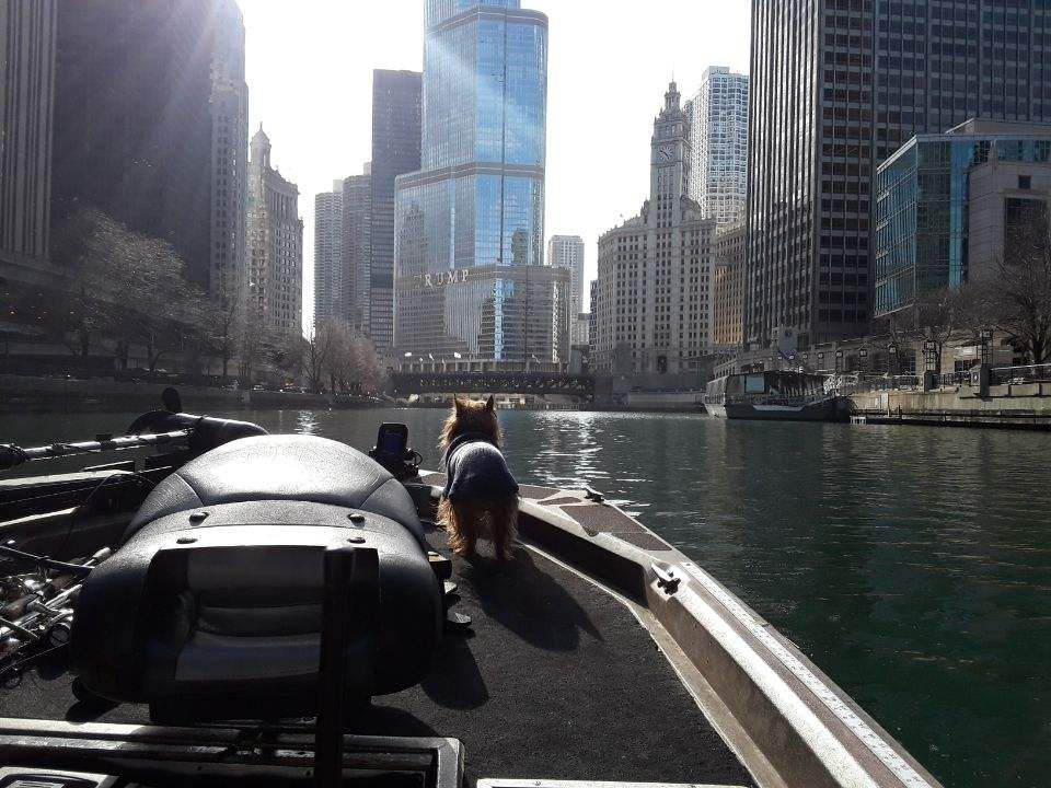 Jeff Nolan looking down the main stem of the Chicago River as the lone boat. Provided photo