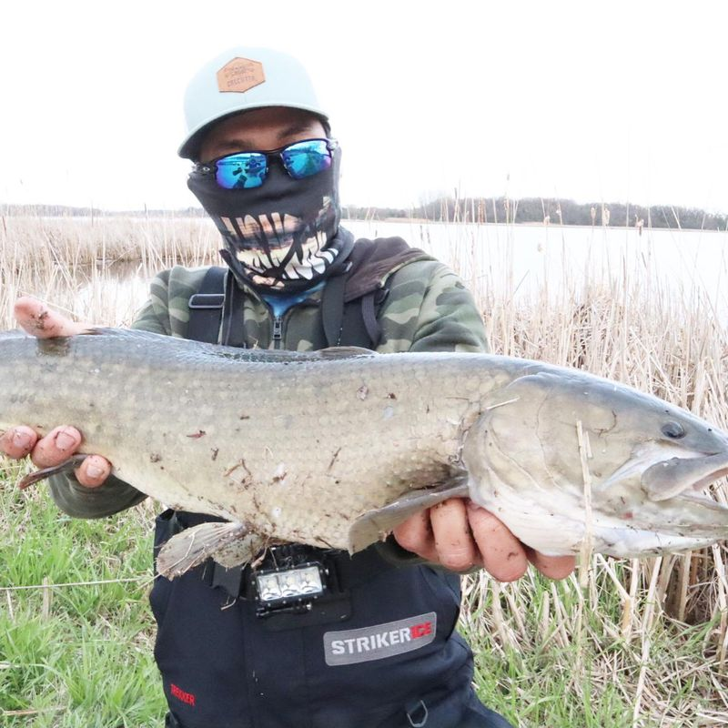 """Jason """"Special"""" Le caught a suburban bowfin (dogfish). Provided photo"""