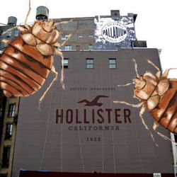 Hollister goes down!