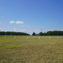 """White markers designate the location of a """"woodhenge"""" at Poverty Point in Louisiana. A """"woodhenge""""is a circular alignment of upraised wooden beams used to create a ritual area and for astronomical observation, similar to that of Stonehenge."""