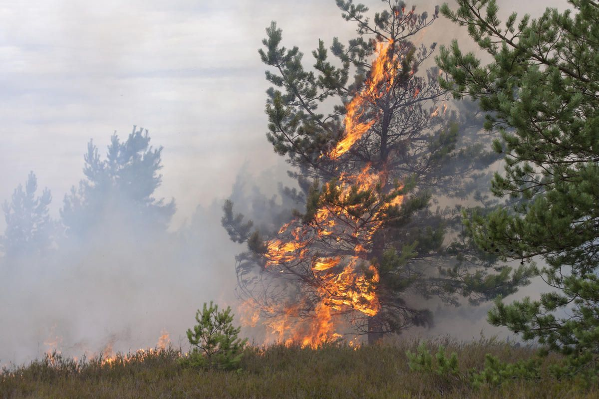 A wildfire started by an ATV crash burned 20 acres near Soldier Hollow on Friday, officials reported.
