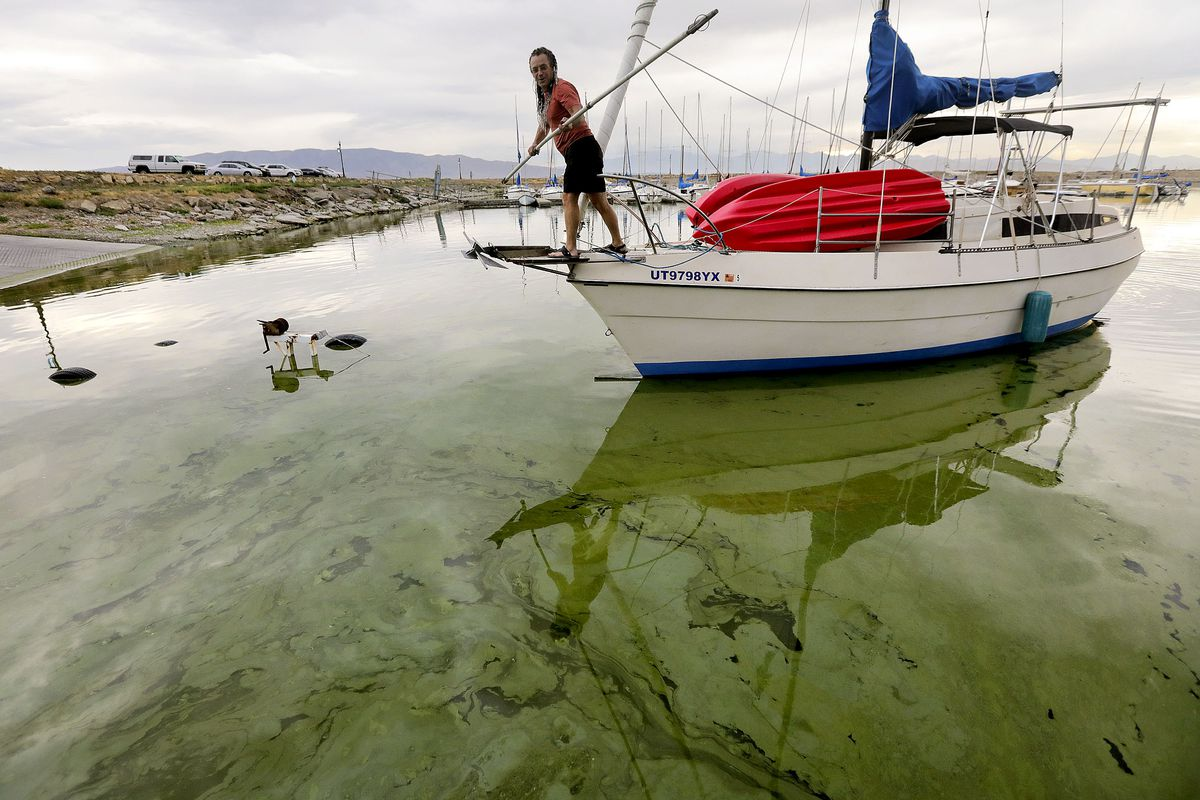 Jeff Mortensen guides the boat Odyssia through algal blooms in Utah Lake toward a boat ramp at the Lindon Marina in Vineyard.