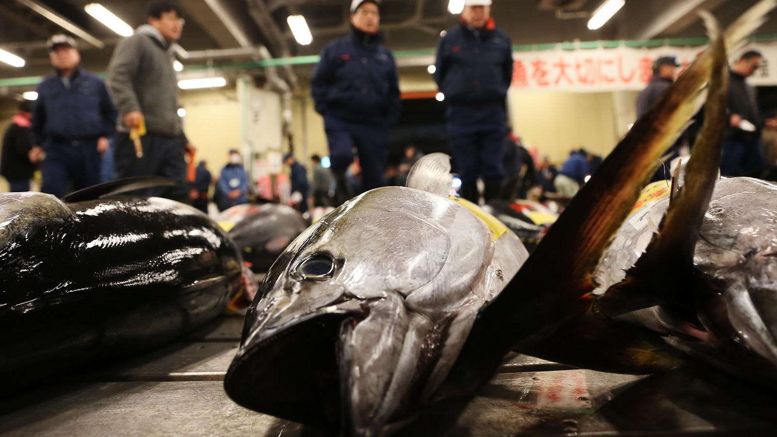 Japanese restaurateur pays princely sum of 118k for a for Tsukiji fish market chicago