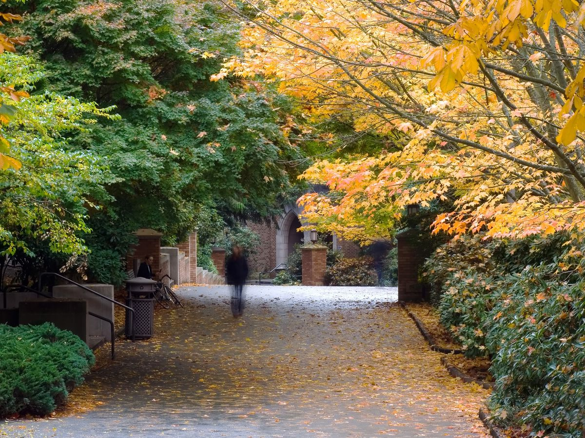 A wide, paved path is lined with trees, including a dramatic one with orange foliage on the right. The path has been partially covered in autumn leaves.