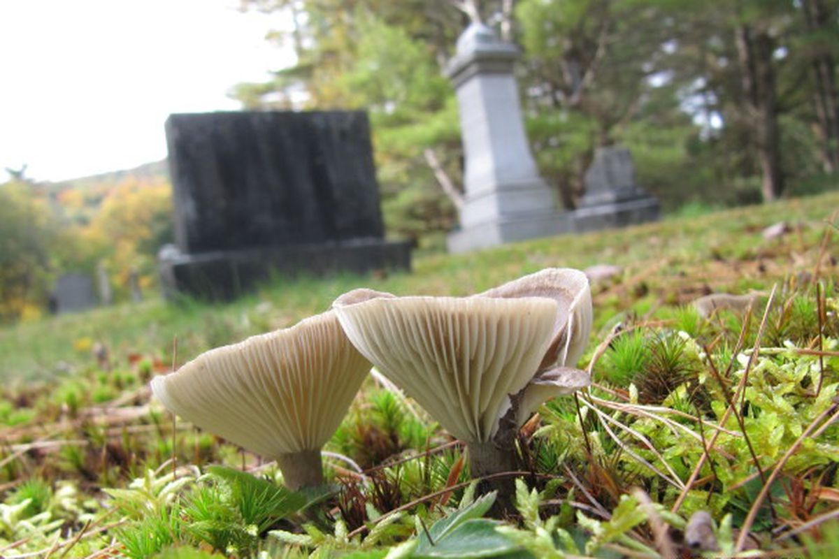 grave flickr cc wallygrom stock 640