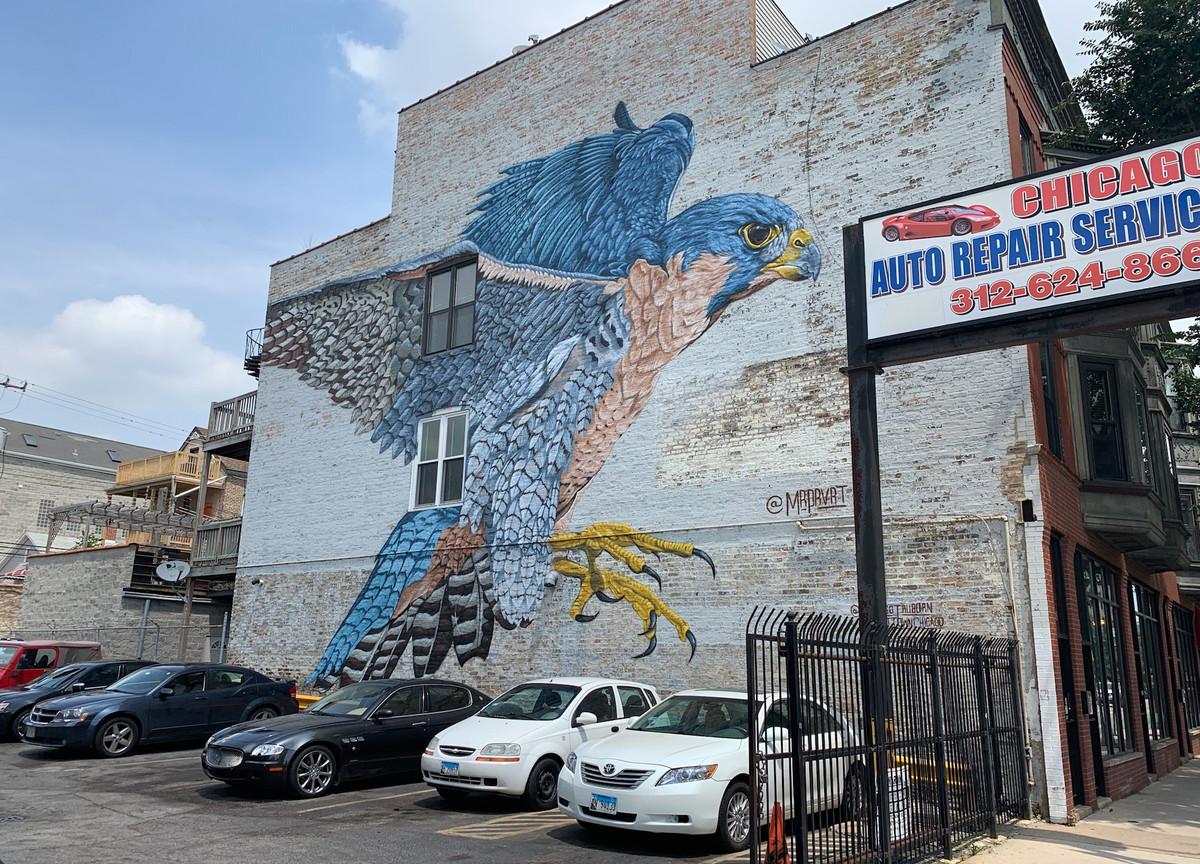 This mural of a peregrine falcon near Chicago Avenue and Paulina Street was painted in 2019 by Justin Suarez, an artist from Rochester, New York.