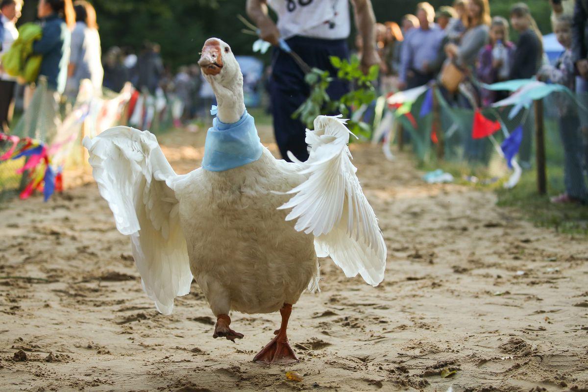 Goose Festival in Gus Zhelezny, Russia