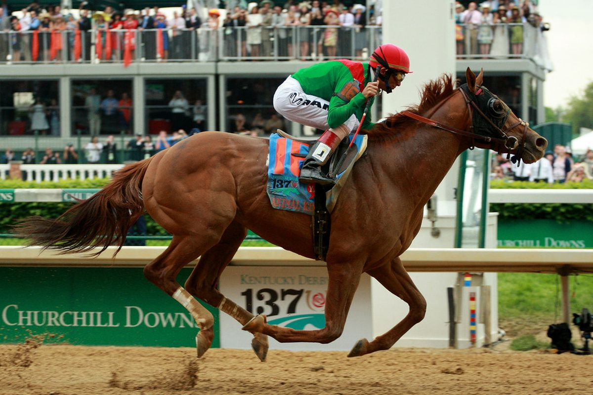 LOUISVILLE, KY - MAY 07:  Jockey John Velazquez, riding Animal Kingdom #16 crosses the finish line on way to winning the 137th Kentucky Derby at Churchill Downs on May 7, 2011 in Louisville, Kentucky.  (Photo by Travis Lindquist/Getty Images)