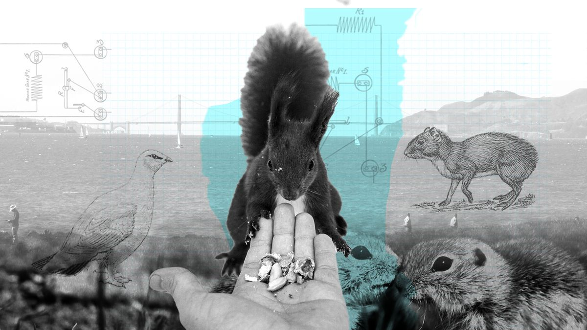 A photo illustration of a person feeding a squirrel out of their hand.