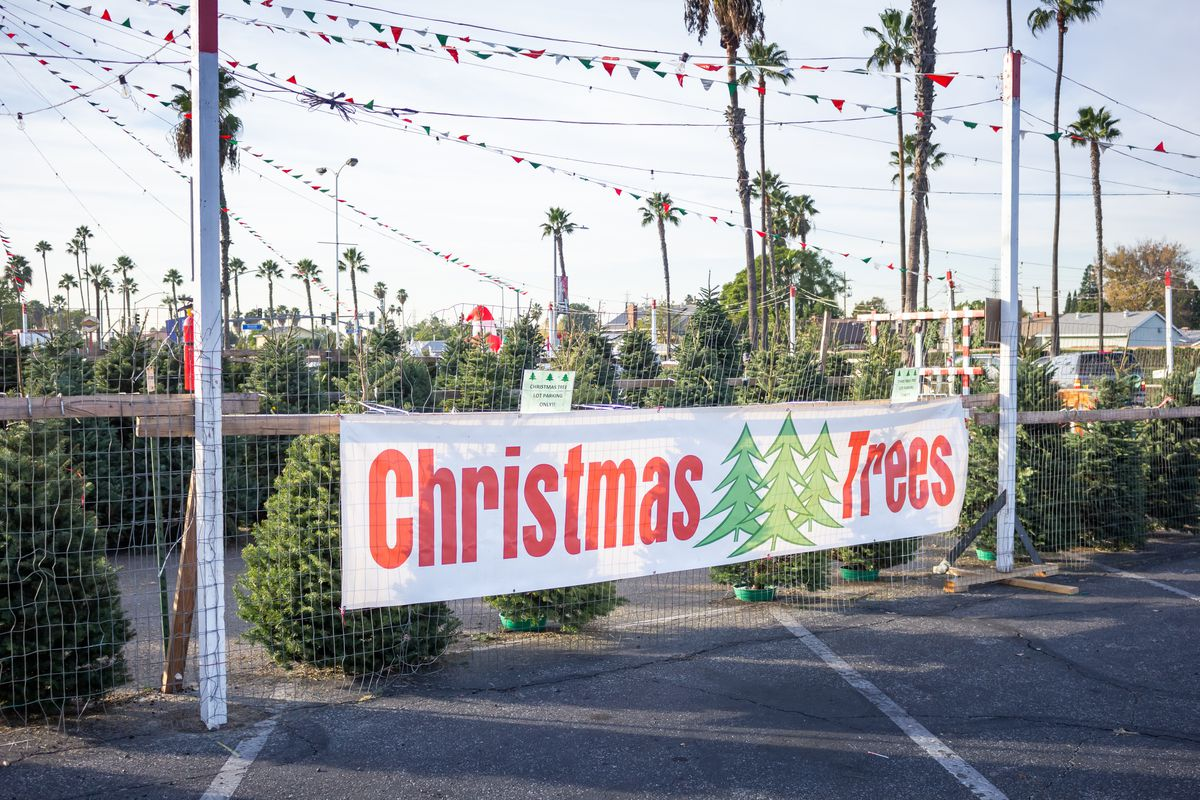 """A sign that says """"Christmas Trees"""" in front of a fenced lot with dozens of pine trees"""