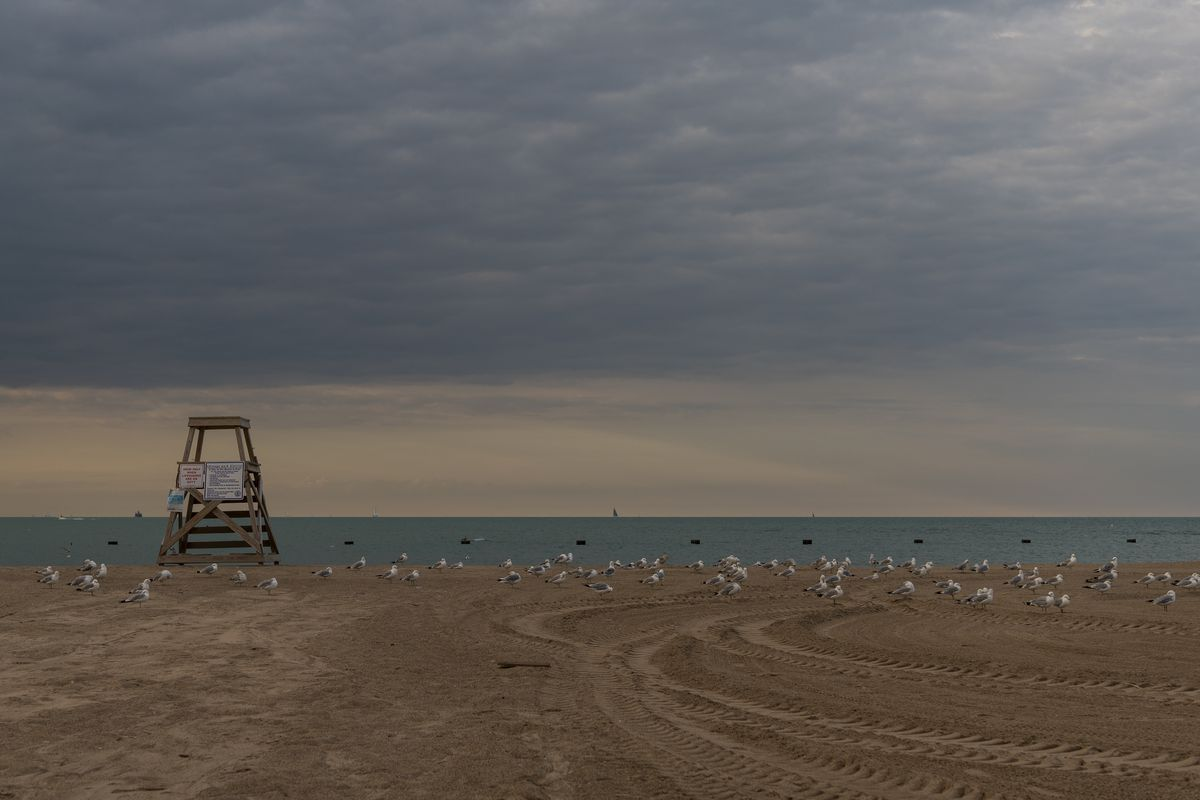 Hundreds of seagulls roost on the sand at North Avenue Beach in August 2020. A private attorney will finish an investigation of allegations of widespread sexual harassment among the city's lifeguards and an alleged coverup by Park District officials.