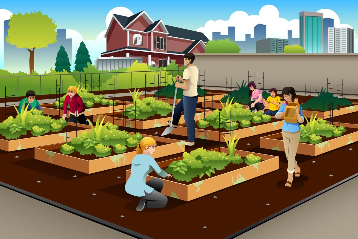 The Real Value Of Urban Farming Hint Its Not Always The Food Vox