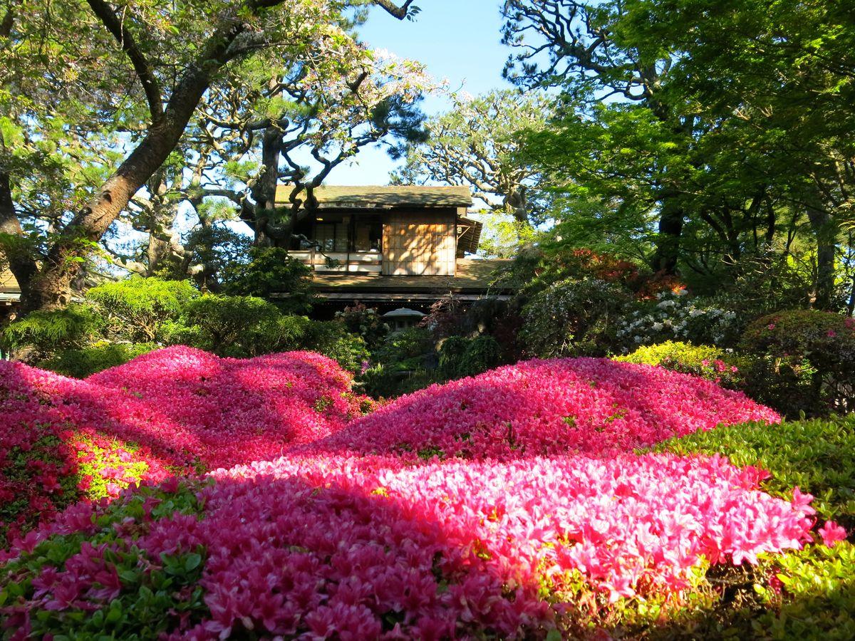 21 places to celebrate spring in San Francisco - Curbed SF - photo#20