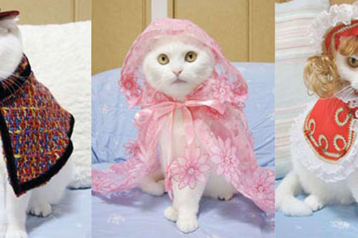 """Those United Bamboo cats got off pretty easy compared to Fashion Cats. Images via <a href=""""http://www.powerhousebooks.com/site/?s=fashion+cats"""">Powerhouse Books</a>"""