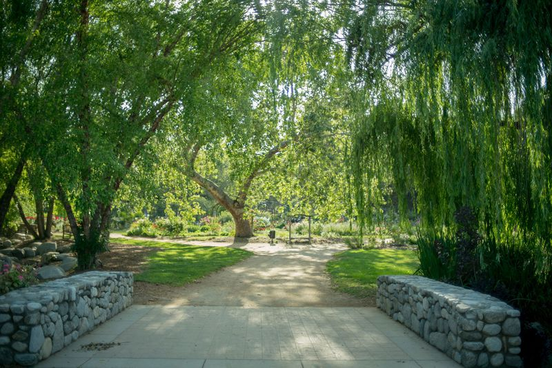 A photo of a bridge and weeping-willow-type tree inside Descanso Gardens.