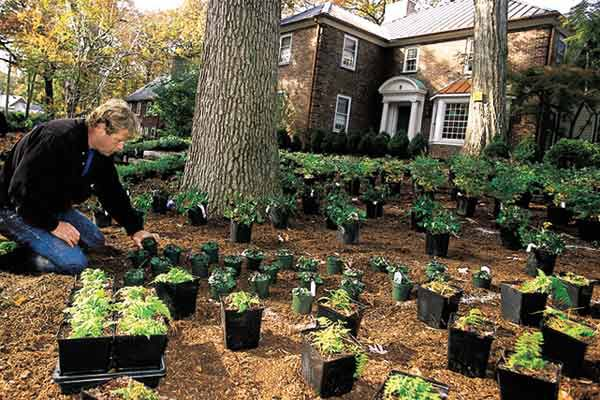 Man Adding Small Plants To Yard With No Grass
