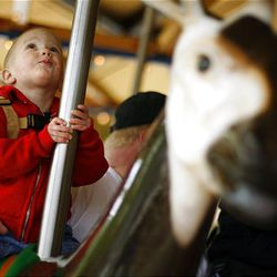 As he rides, 2-year-old Anders Farnsworth examines the features of the Conservation Carousel, Hogle Zoo's newest attraction.