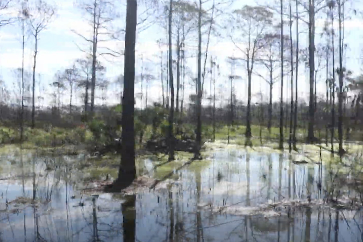 A photo of the Carlton Reserve in Florida, where North Port police, FBI are searching for Brian Laundrie.