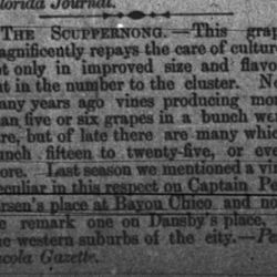 raise for the Scuppernong grape in the Pensicola, FL Gazette, 1878. The grape variety first cultivated in Florida by French Huguenot settlers in the 1500s.
