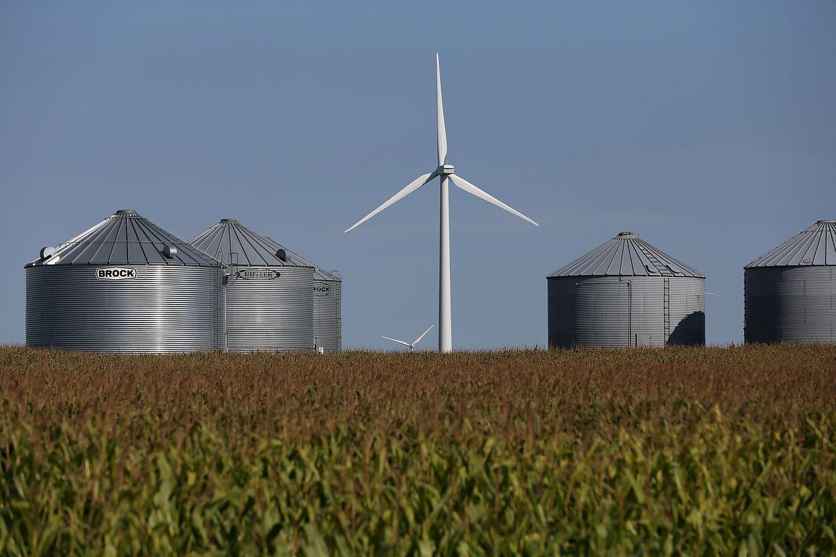 Wind mills in a corn field near Colo, Iowa.