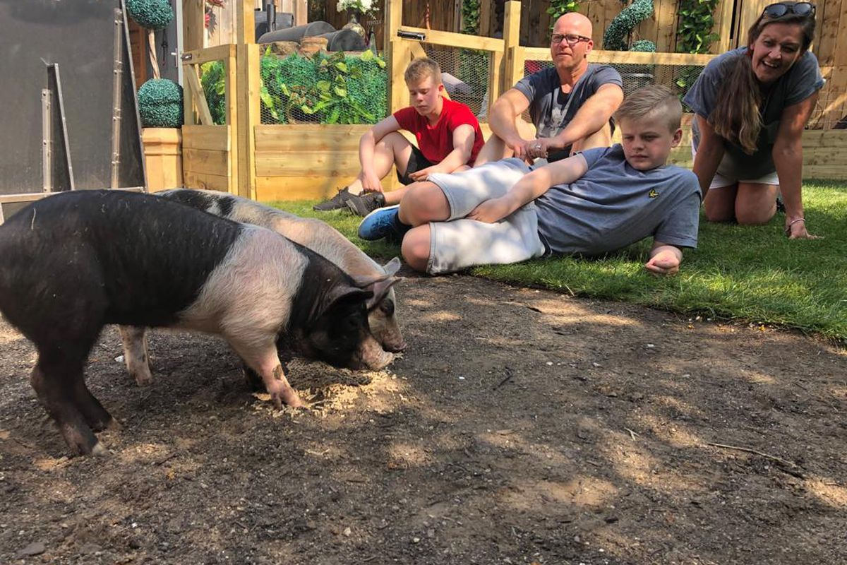 A still from Channel 4's Meat the Family, in which two pigs snuffle at the soil as a family of four looks on