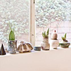 Plants in the window.