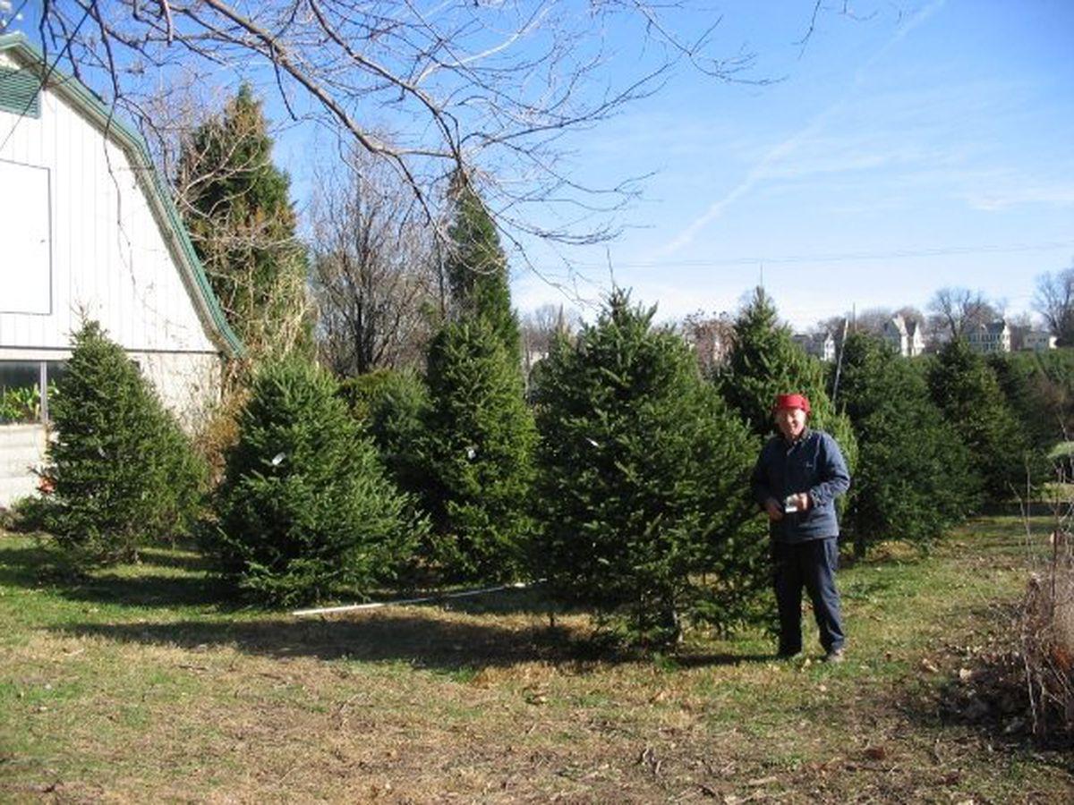 maynes tree farm photo facebook - Middleburg Christmas Tree Farm
