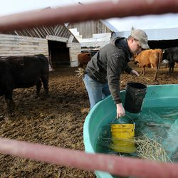 Addison Hicken fills buckets with water to put into a bin for the cattle in another pen as he works on his farm in Heber City on Wednesday, March 11, 2020.