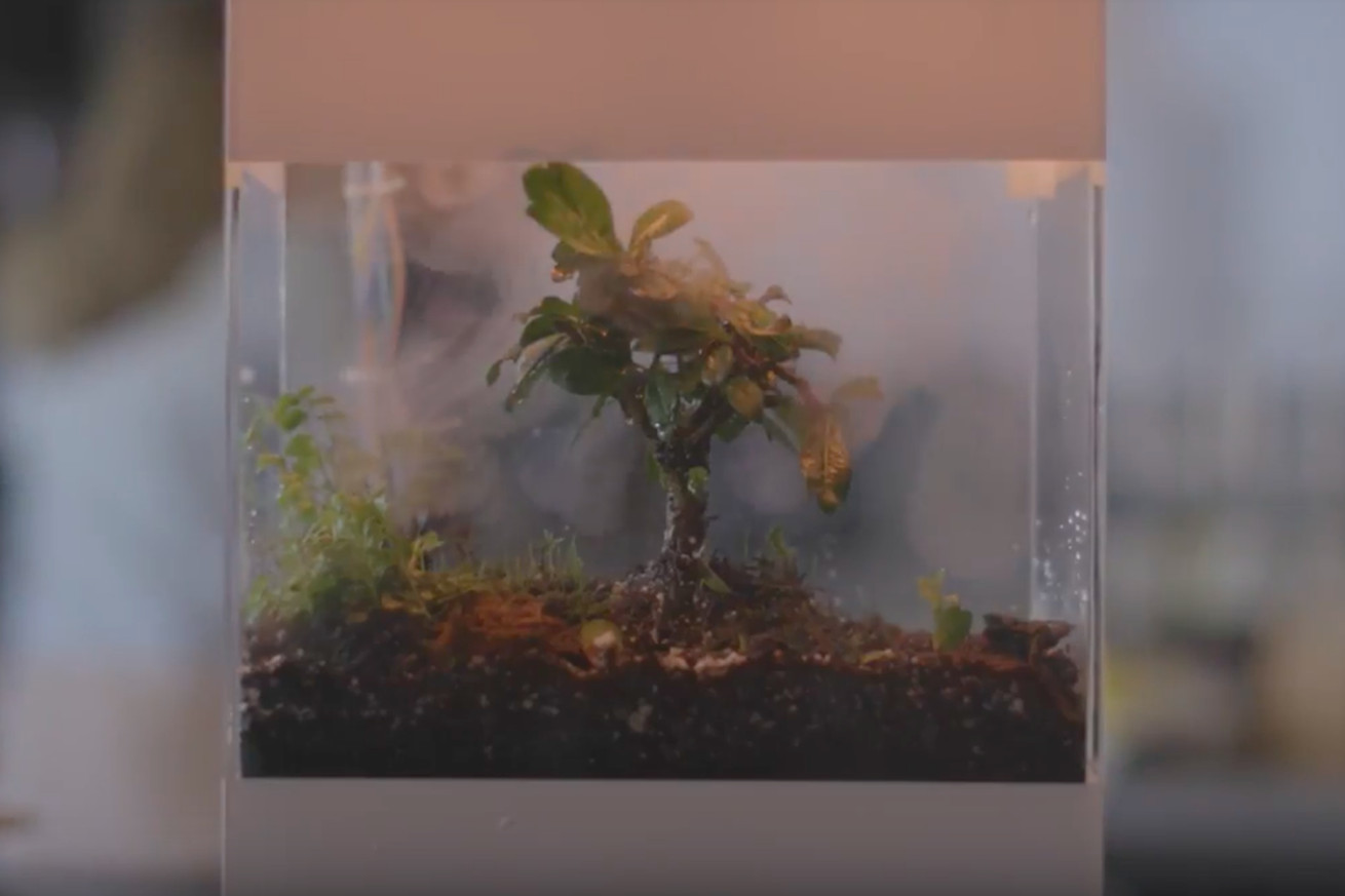 google made an ai backed terrarium that shows weather conditions around the world