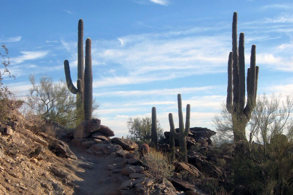The National Trail on Phoenix's South Mountain. Photo: C.J. Schexnayder