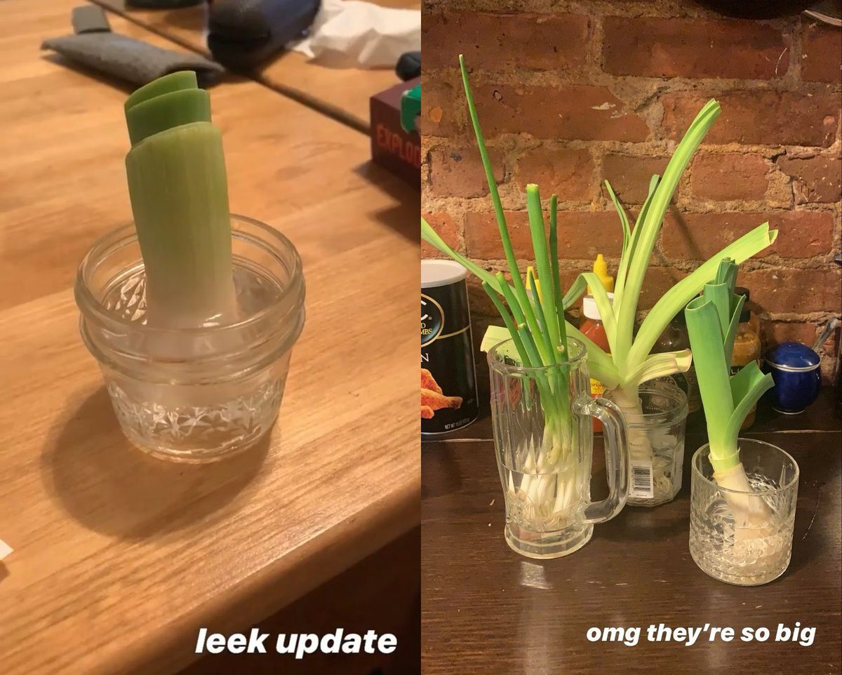 A diptych of leeks, green onions, and scallions growing over time.