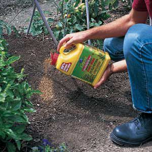 Man Sprinkles Preemergence Herbicide Near Plants