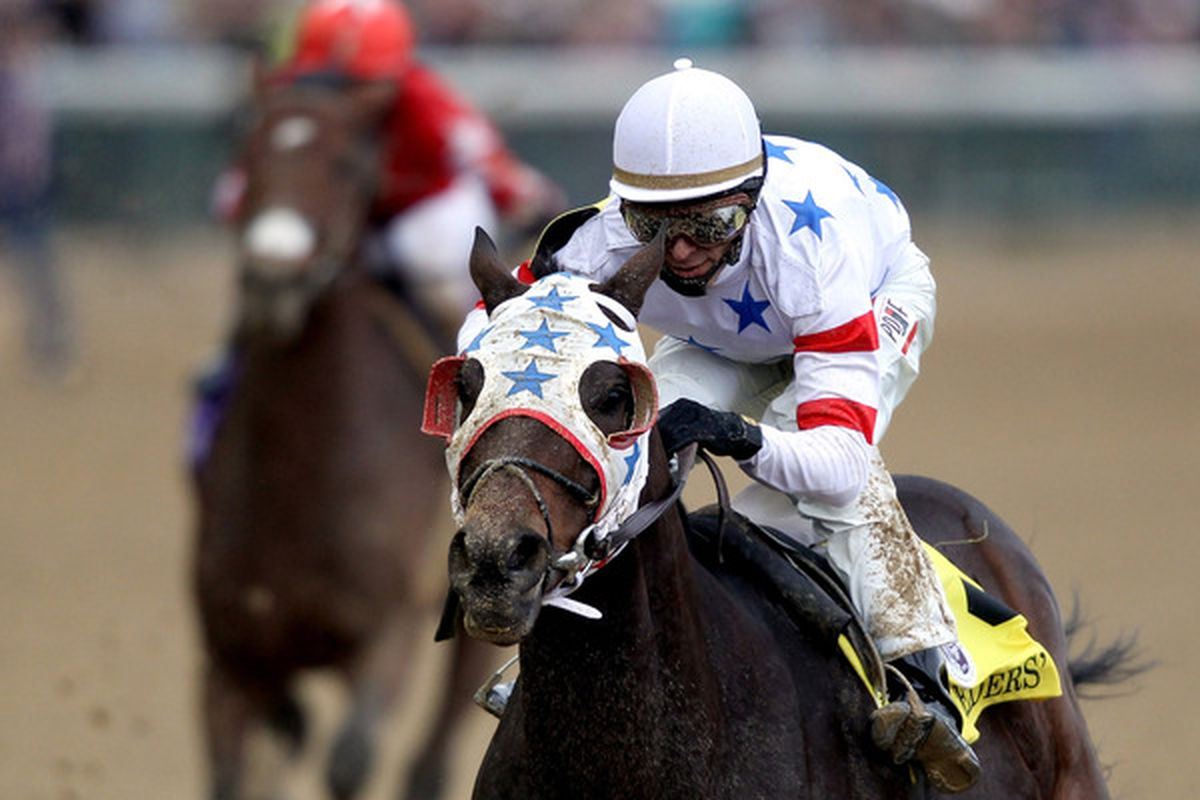 Eldaafer won last year's Breeders' Cup Marathon.  If you want to see this year's winner, you'll have to watch TVG.  ESPN/ABC has decided to not broadcast the 2011 Breeders' Cup Marathon.