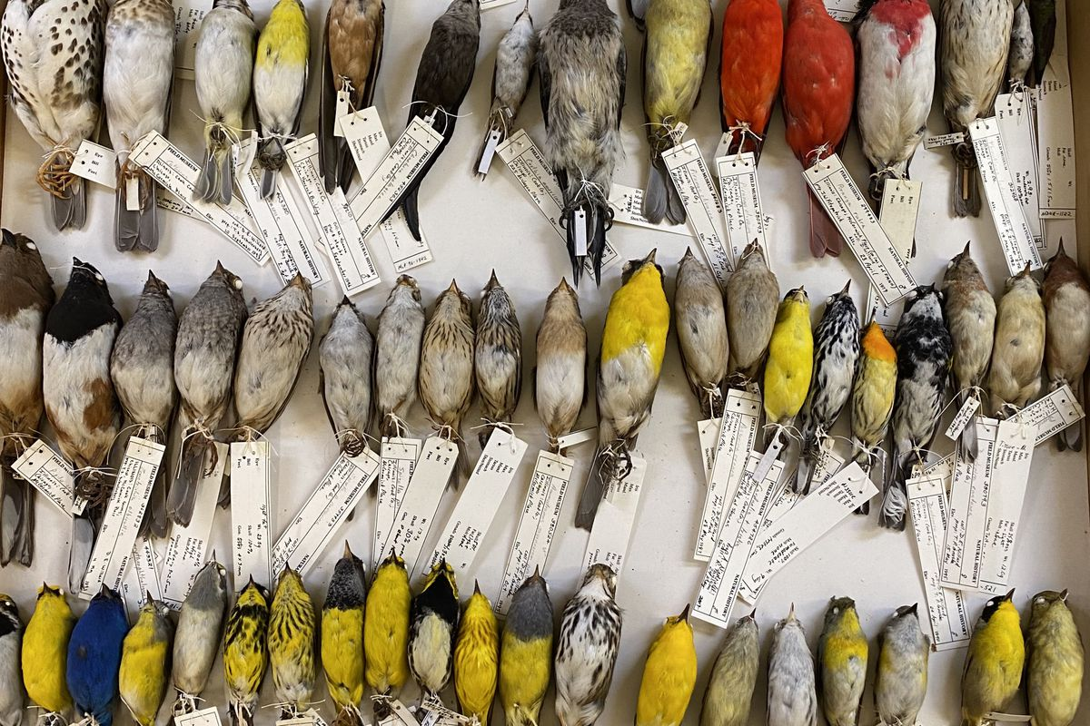 Rows of dead birds, each with an identification card attached to its feet.