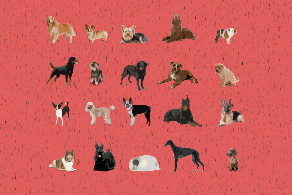 America's top dog: how the most popular breeds have changed