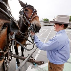 Ian Bown stands in front mules Jane and Honey from Muleskinner.com that are hitched to a wagon driven by Bown's grandfather, Tennessee John Stewart, at West High School in Salt Lake City on Monday, July 19, 2021. They joined Gov. Spencer Cox, first lady Abby Cox and others in driving a small herd of Texas longhorn along North Temple toward the Utah State Fairpark to celebrate the return of the Days of '47 Cowboy Games and Rodeo.