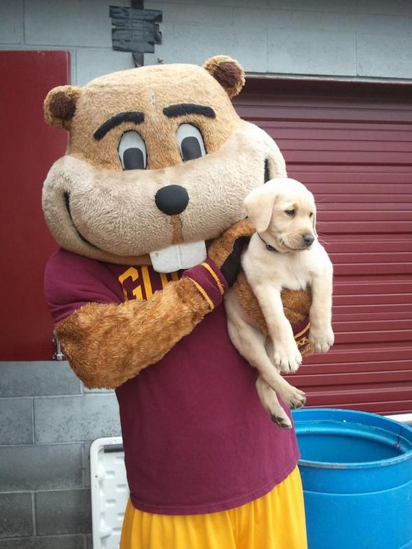 Goldy and Puppy