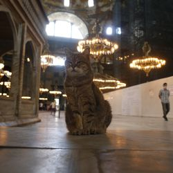 A cat sits as people visit the Byzantine-era Hagia Sophia, an UNESCO World Heritage site and one of Istanbul's main tourist attractions in the historic Sultanahmet district of Istanbul, Friday, July 10, 2020. Turkey's Council of State, the country's highest administrative court is expected to release a ruling on a petition requesting that a 1934 decision that turned the Hagia Sophia into a museum be annulled.