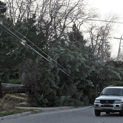 Fallen trees damage powerlines, homes and automobiles due to high winds along Highway 89 in Centerville and Farmington Thursday morning, December 1, 2011.