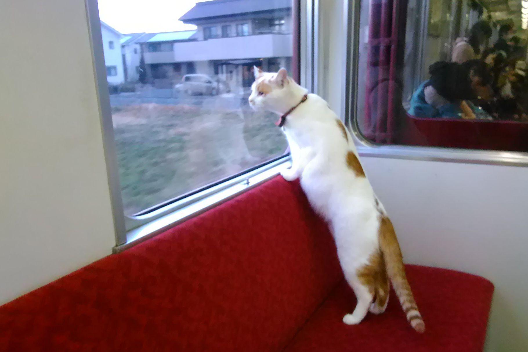 Ride the Cat Train