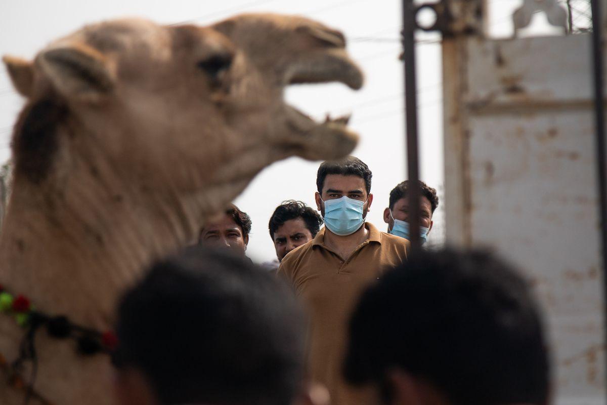 Cattle Yards Draw Huge Crowds On Eve Of Eid al-Adha