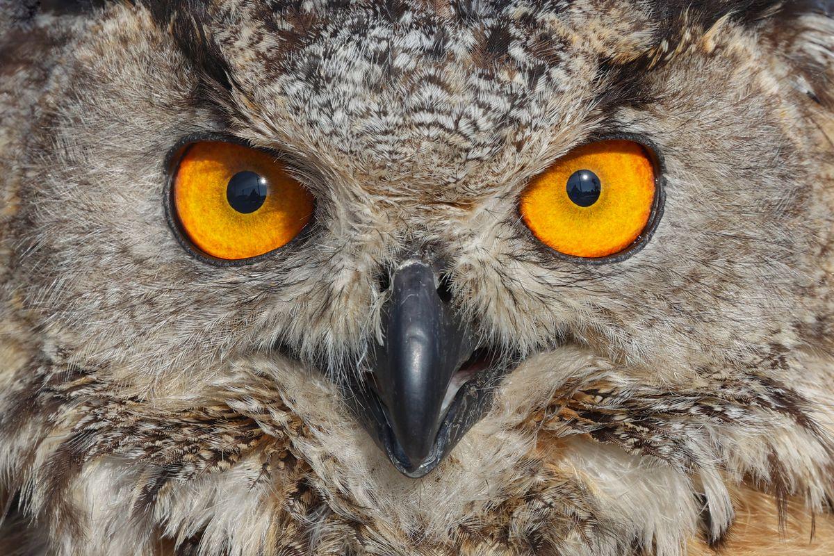 An owl seen in Van, Turkey.
