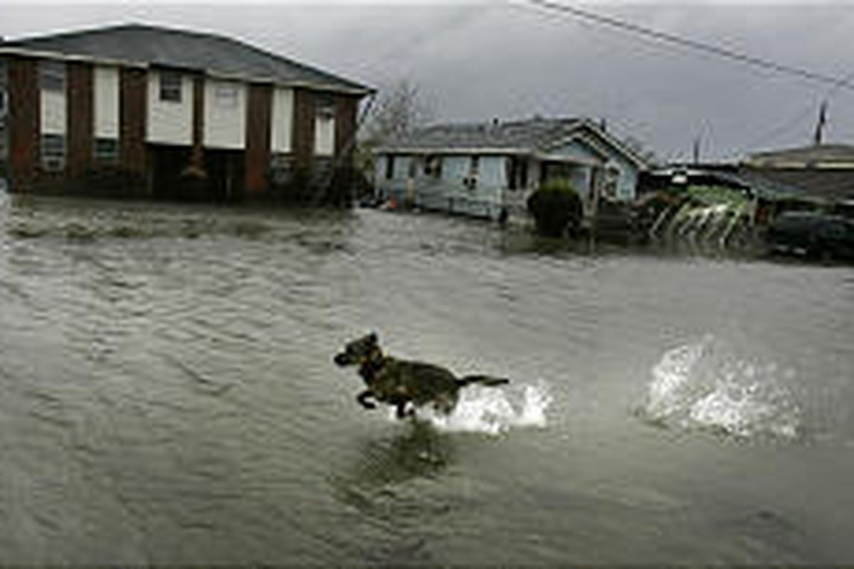 A dog runs down a flooded North Claiborne Avenue in New Orleans on Friday. Hurricane Rita's surge has pushed water back into neighborhoods that had just dried out.