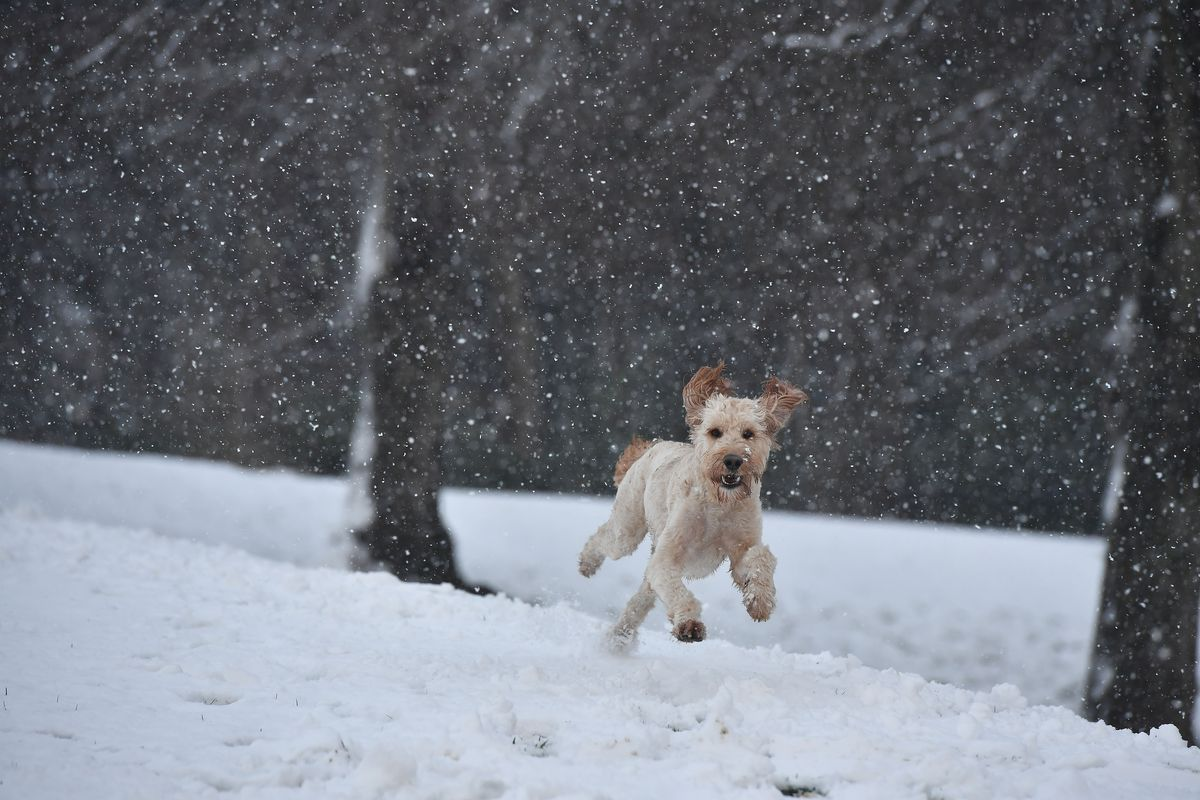 First Snow of Winter Hits Northern Ireland