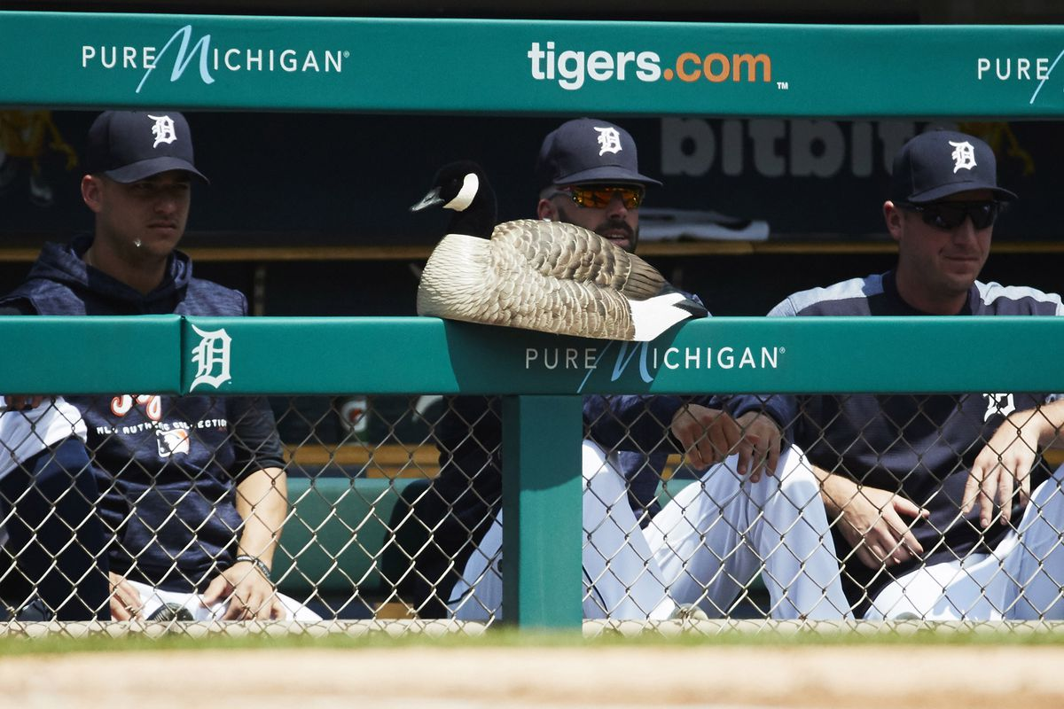 The Detroit Tigers now have a Rally Goose in their dugout - Bless ...