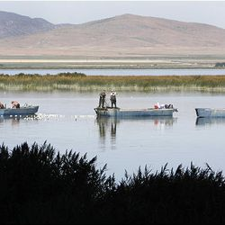 Bill Loy and his crew haul in the net used to fish for carp in Utah Lake. Loy has been hired by the Central Utah Water Conservancy District to remove from the lake 5 million pounds of carp a year for the next five years.