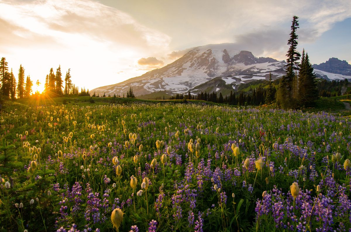 A grassy field is brightly lit at the beginning of sunset, and is full of yellow and purple flowers. There's a mountain looming in the background.