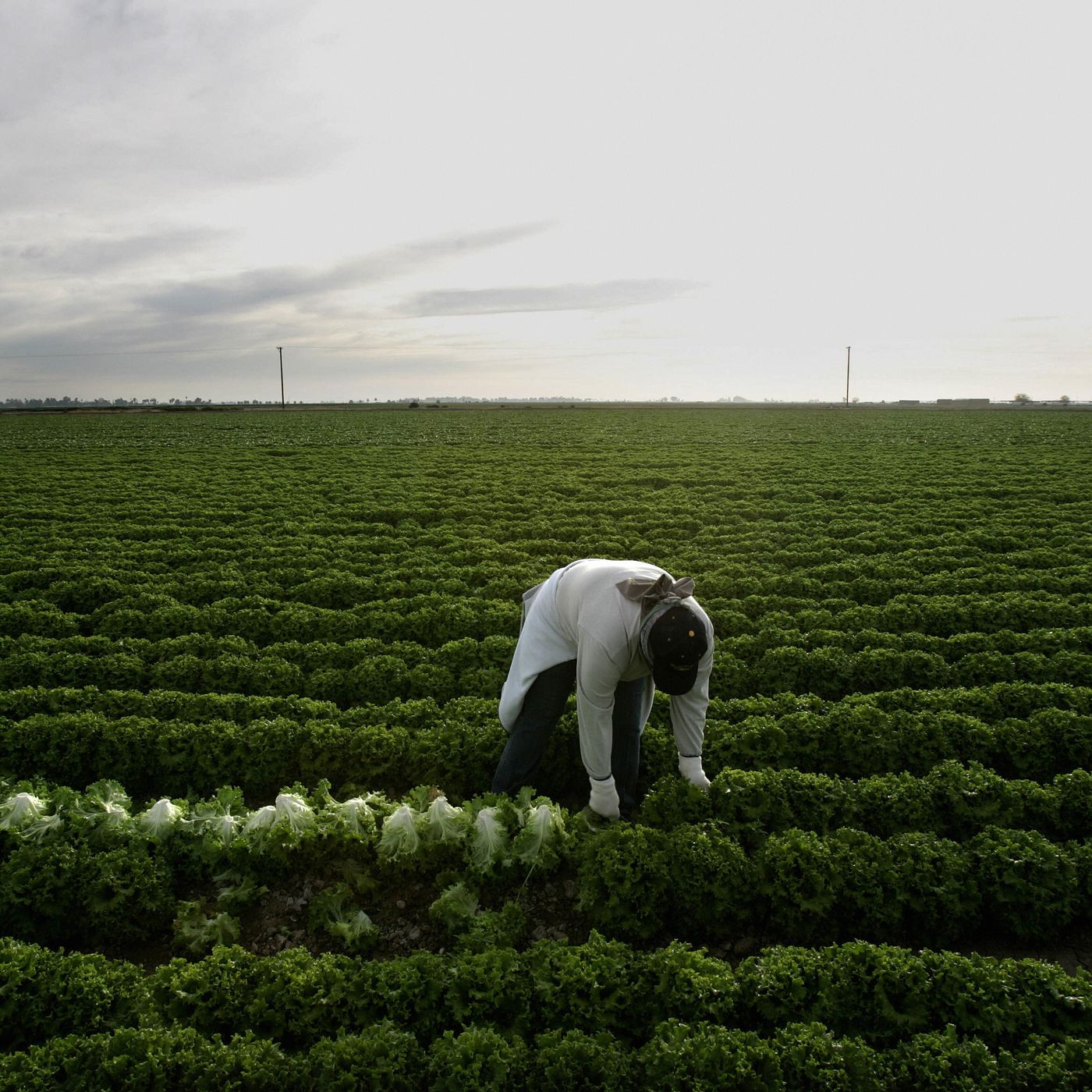 Farm Workers Are In The Coronavirus Crosshairs Eater