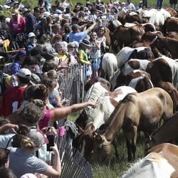 People get a close look at wild ponies and foals as they rest on the shores of Chincoteague Island, Va., after swimming from nearby Assateague Island during the 94-year-old swim tradition of Pony Penning on Wednesday, July 24, 2019. During the event, the horses navigate through the water for a couple hundred yards, and, after resting, are walked down the streets of Chincoteague and eventually end up at a carnival where the foals are actioned.